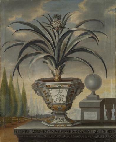 David von Cöln: Ananasväxt